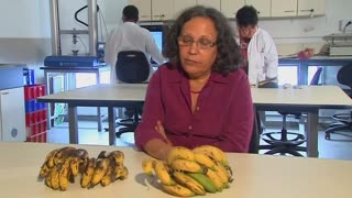 Israeli researchers use gene to extend shelf life of bananas - Video