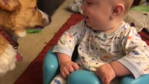 Hyper corgis send twins into giggle fit