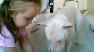 Young Girl Bathes Bull Terrier - Video