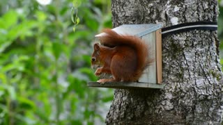 lovely squirrel eating on tree