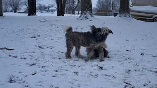 Doodle Dogs Playing in the Snow