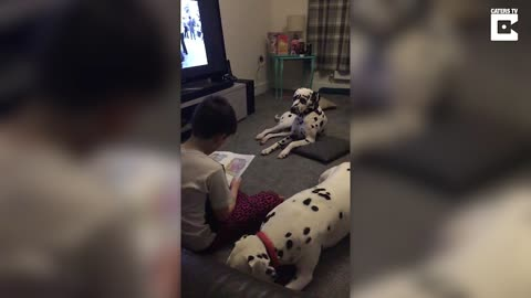 Autistic Boy Is Finally Able To Read Thanks To These Special Dogs