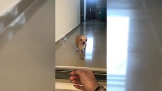 Cute Dog Smiles At Her Owner - Video