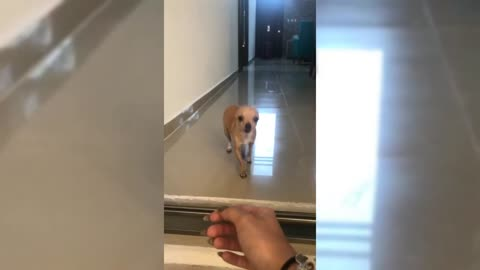 Cute Dog Smiles At Her Owner