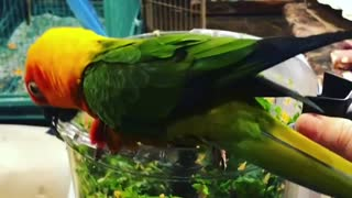 Sam the macaw shows his love for food