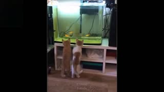 Cute pets just doing their thing