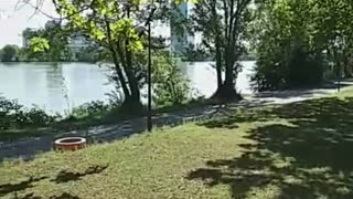 Dogs Sunny a lovely dog from Vienna Donau Wien Vienne jack russel mix