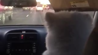 Dog Loves Going On Long Road Trips - Video