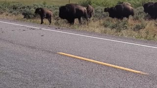 Bison Crossing Road in Grand Teton National Park
