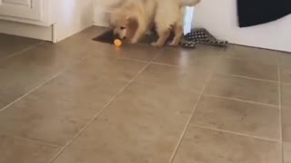 dogs looking for food in the house