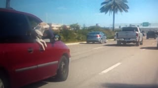 Dog Jumps From Van During Sudden Stop