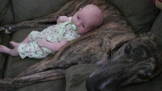 Panting Dog Rocks Baby To Sleep - Video