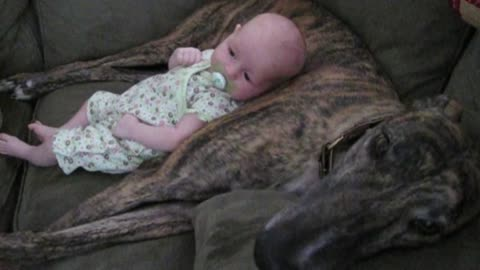 Panting Dog Rocks Baby To Sleep