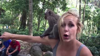 Monkey climbs all over girl