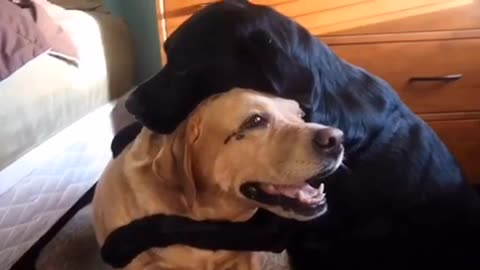These Two Dogs Just Can't Stop Hugging Each Other