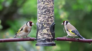 Two Birds Finds Food Locker In Garden