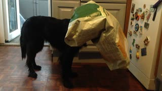 Greedy dog gets stuck inside food bag, pretends to be invisible