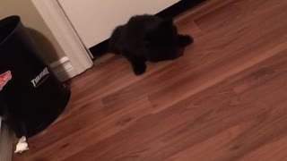 Black cat slides under door  - Video
