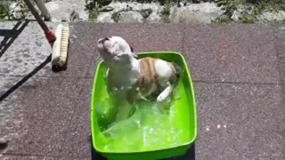 Puppy Enjoys His Own Pool Party