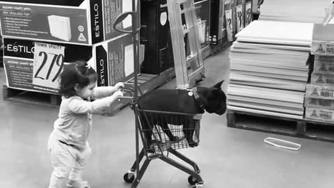 Little girl pushes her doggy in shopping cart