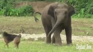 An Elephant Is Facing A Dog Inastreng Eway