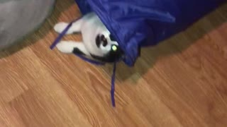 Weirdo cat nose-dives into vertical tunnel - Video