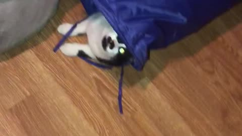 Weirdo cat nose-dives into vertical tunnel
