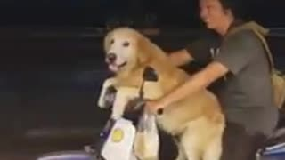 Dog rides scooter with owner in Thailand - Video