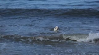 Seal Meets Dog - Video