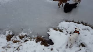 All black slip ice faceplant dogs - Video