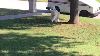Mail Delivery Gone to the Dog