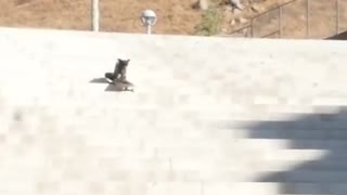 Fearless dog skateboards down long flight of stairs