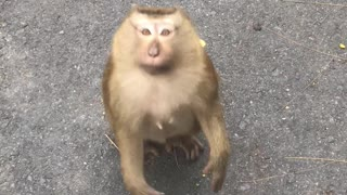 friendly monkey