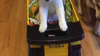 White shiba puppy dog rides in yellow tonka truck in hallway