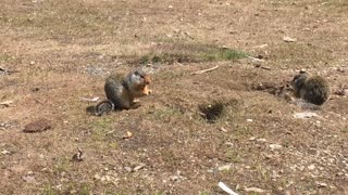 Friendly ground squirrels come above ground for treats