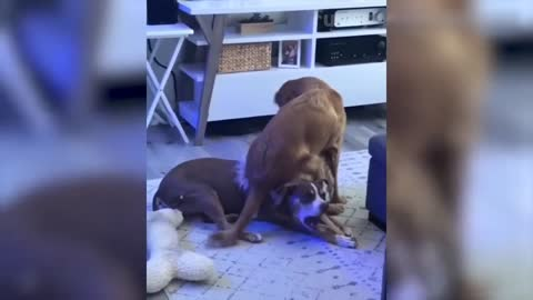 Pet World: Collection of Funny Pet Videos