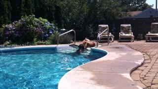 """Chocolate Labrador """"Rescues"""" Pomeranian From Deep End Of A Pool - Video"""