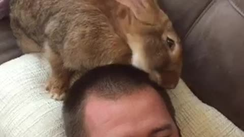 Giant Bunny Gives Owner A New Look And It's Beyond Hilarious