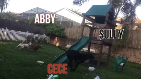 Sully, Abby.'c and Cece