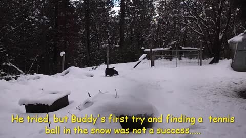 An energetic dog has fun in the snow!