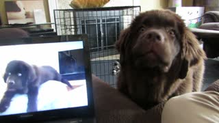Puppy receives video message from his brother - Video