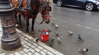 Horse and Pigeons Share Meal