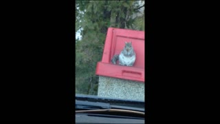 Family laughs at dumpster diving squirrel
