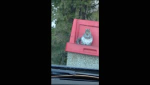 Family laughs at dumpster diving squirrel - Video