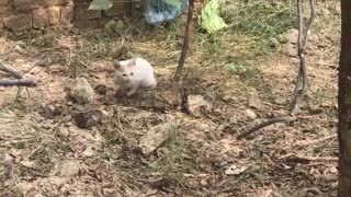 a small cat is looking like rabbit  - Video