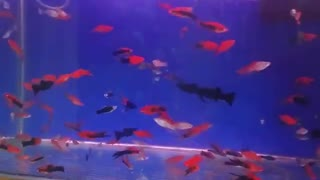 Aquarium fish - Video
