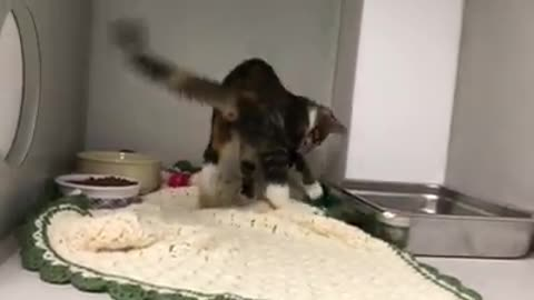 'Twerk' the kitten's video goes viral and she finds a home