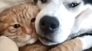 This is love between a cat and a dog