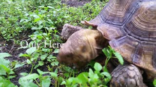 Tortoise inspires 1 minute poem - Video