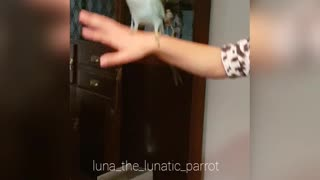 Dancing Bird - Video